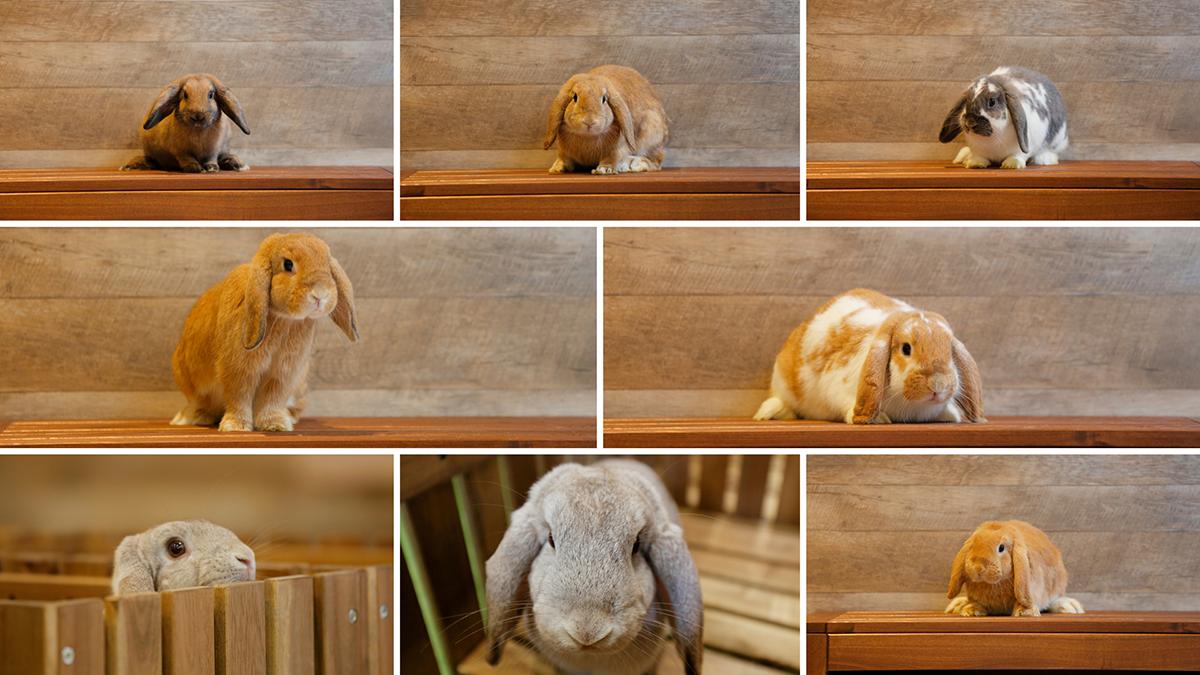 アニミルカフェの動物たち